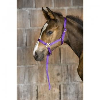 norton-foal-halter-lead-rope.jpg