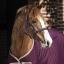 horseware_amigo_ripstop_travel_boots_navy_fig_tan_1.jpg